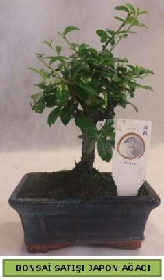 Minyatür bonsai ağacı satışı  Iğdır Söğütlü çiçek siparişi sitesi