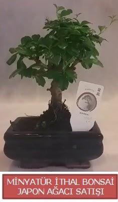 Küçük görsel bonsai japon ağacı bitkisi  Iğdır Konaklı internetten çiçek siparişi