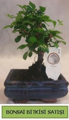 Bonsai ithal görsel minyatür japon ağacı  Iğdır Cumhuriyet çiçek siparişi vermek