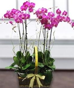 7 dallı mor lila orkide  Iğdır 14 kasım hediye çiçek yolla