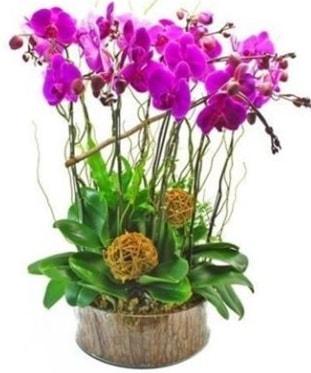 Ahşap kütükte lila mor orkide 8 li  Iğdır Enginalan uluslararası çiçek gönderme