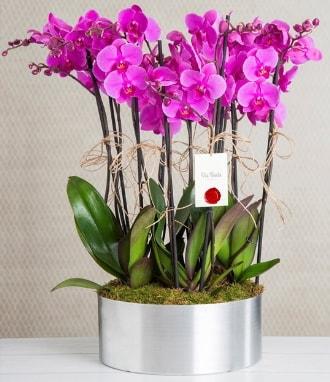 11 dallı mor orkide metal vazoda  Iğdır 14 kasım hediye çiçek yolla