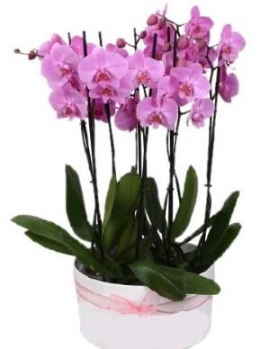 Beyaz seramik içerisinde 7 dallı mor orkide  Iğdır Karaağaç internetten çiçek satışı