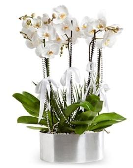Beş dallı metal saksıda beyaz orkide  Iğdır 12 eylül çiçekçi mağazası