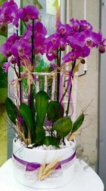 Seramik vazoda 4 dallı mor lila orkide  Iğdır Karakuyu çiçek online çiçek siparişi