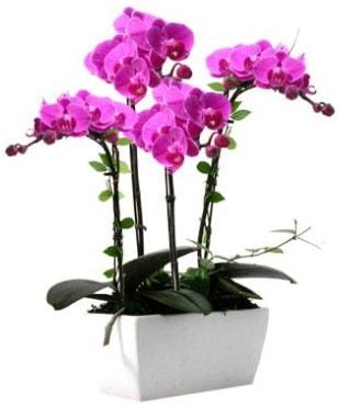Seramik vazo içerisinde 4 dallı mor orkide  Iğdır 7 kasım çiçekçiler