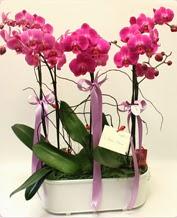 Beyaz seramik içerisinde 4 dallı orkide  Iğdır Cumhuriyet çiçek siparişi vermek