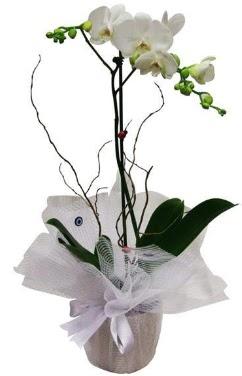 Tek dallı beyaz orkide  Iğdır Hoşhaber çiçek servisi , çiçekçi adresleri