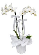 2 dallı beyaz orkide  Iğdır Hakveis çiçek gönderme