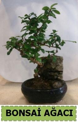 Bonsai ağacı japon ağacı satışı  Iğdır Aşağı erhacı online çiçek gönderme sipariş