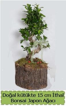 Doğal kütükte İthal bonsai japon ağacı  Iğdır Söğütlü çiçek siparişi sitesi