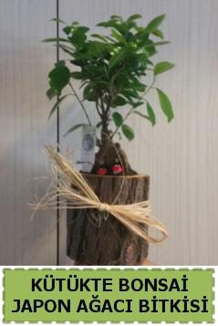 Kütük içerisinde doğal bonsai ağacı  Iğdır Karaağaç internetten çiçek satışı