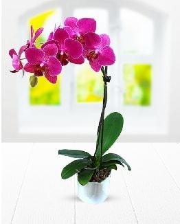 Tek dallı mor orkide  Iğdır 7 kasım çiçekçiler
