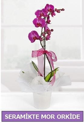 Seramik içerisinde birinci kalite tek dallı mor orkide  Iğdır Bağlar ucuz çiçek gönder