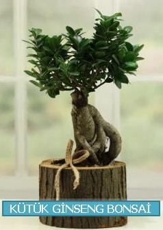 Kütük ağaç içerisinde ginseng bonsai  Iğdır 14 kasım hediye çiçek yolla