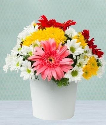 Seramik Vazoda Gelbera ve Papatya  Iğdır Söğütlü çiçek siparişi sitesi