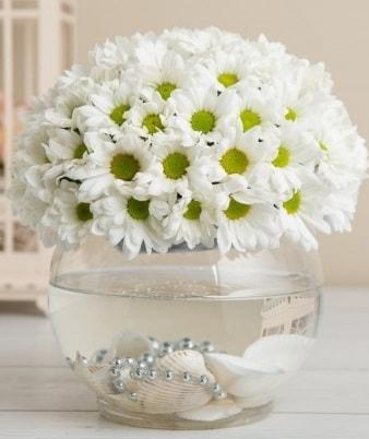 Fanusta beyaz Papatya  Iğdır 7 kasım çiçekçiler