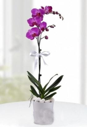 Tek dallı saksıda mor orkide çiçeği  Iğdır Akyumak 14 şubat sevgililer günü çiçek