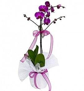 Tek dallı saksıda ithal mor orkide çiçeği  Iğdır Akyumak 14 şubat sevgililer günü çiçek